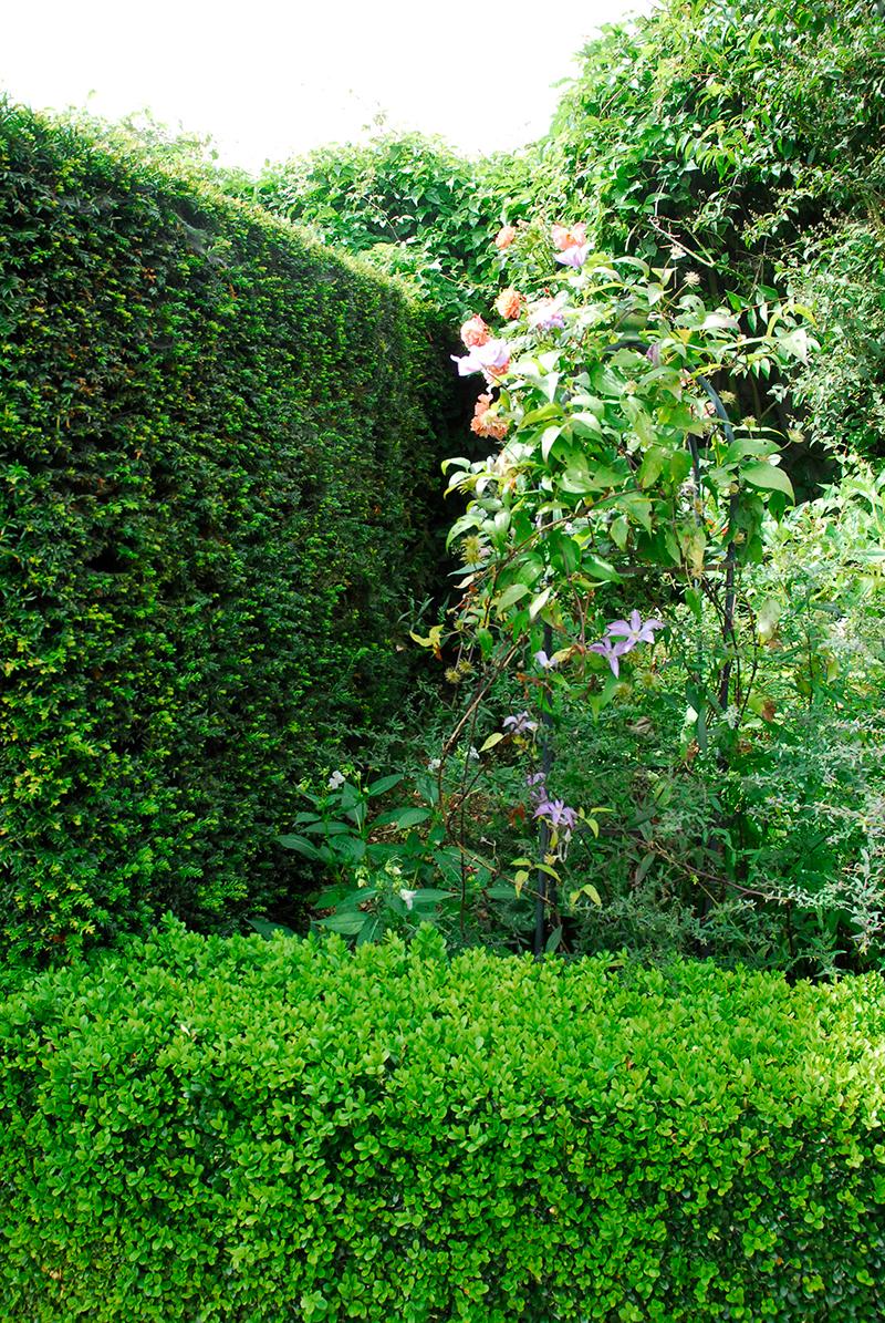 Rumsdelare med häck av idegran och buxbom i trädgård