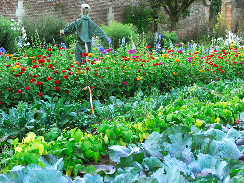 Blandning av grönsaker och blommor i en potager