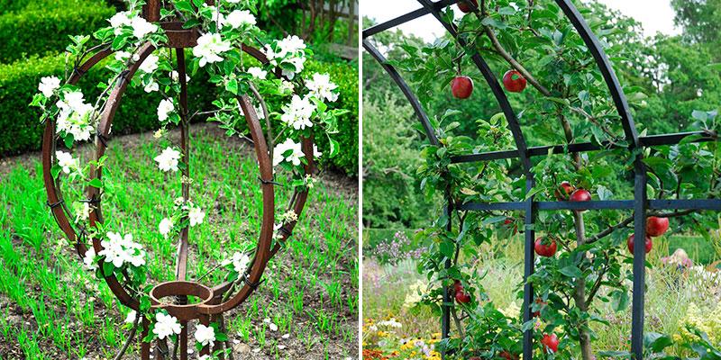 Äppelträd formklippta i grönsaksland och entré