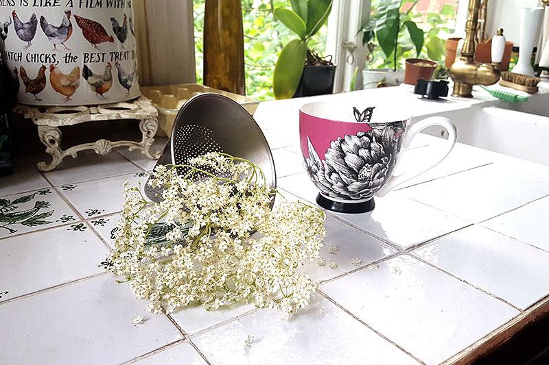 Fläderblomsklase klar för att bryggas till te