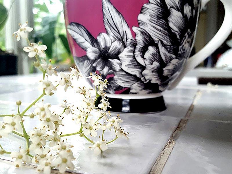 Te bryggt av färska fläderblommor