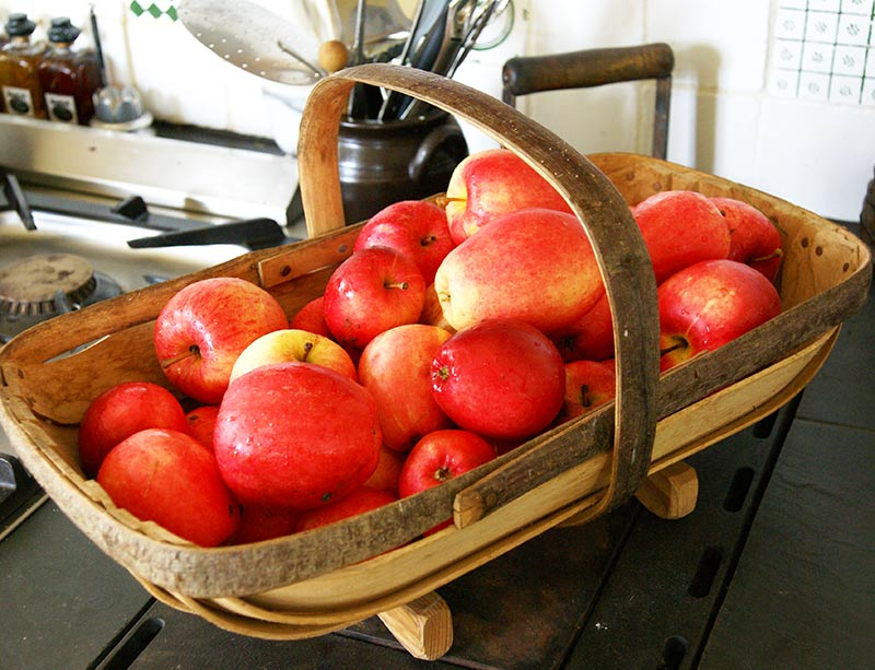 Röda äpplen i en engelsk trädgårdskorg Sussex Trug