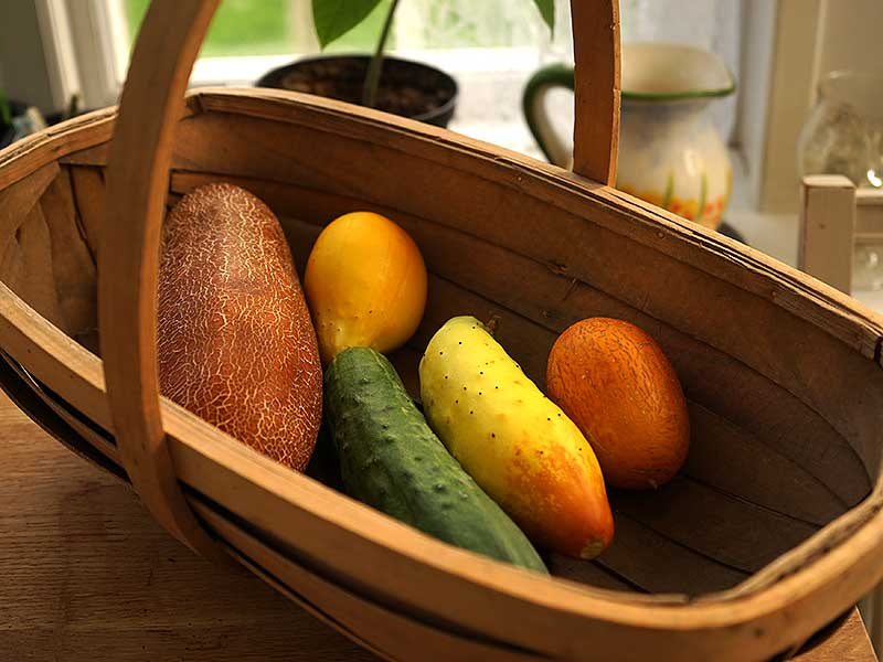 Korg med olika sorters gurkor