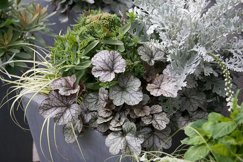 plantering i höstkruka med blad i silver och grått