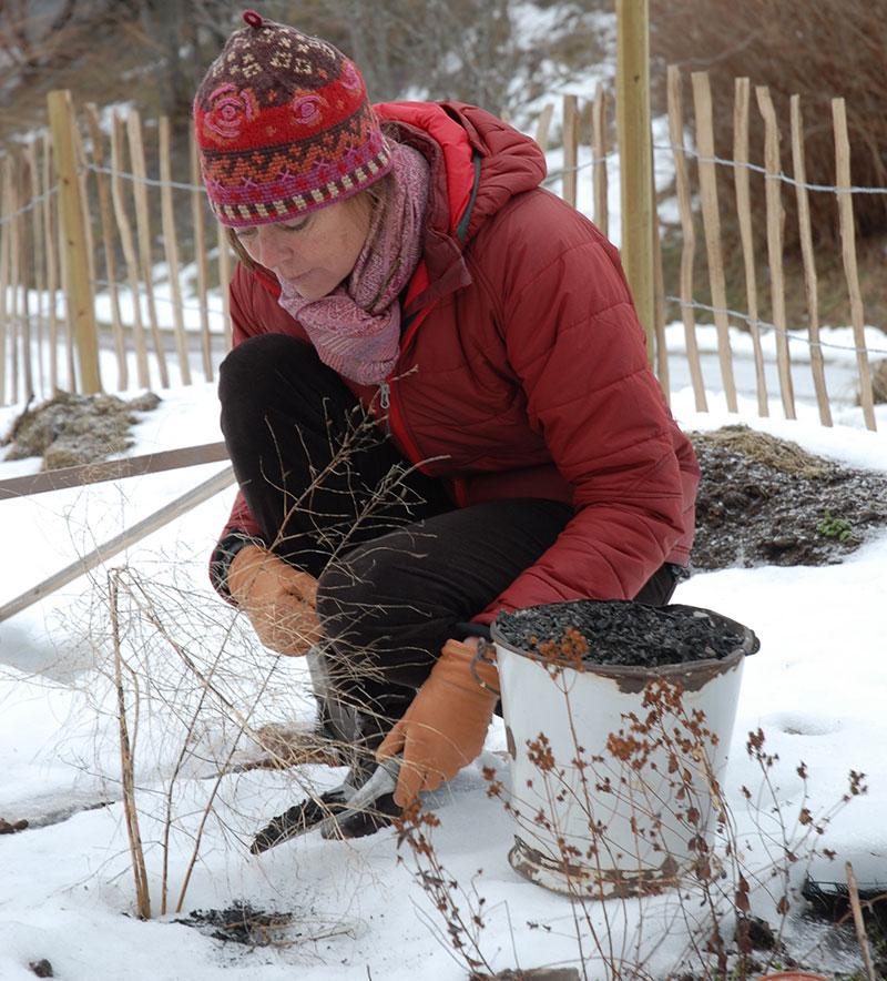 spridning av aska till sparris på vintern