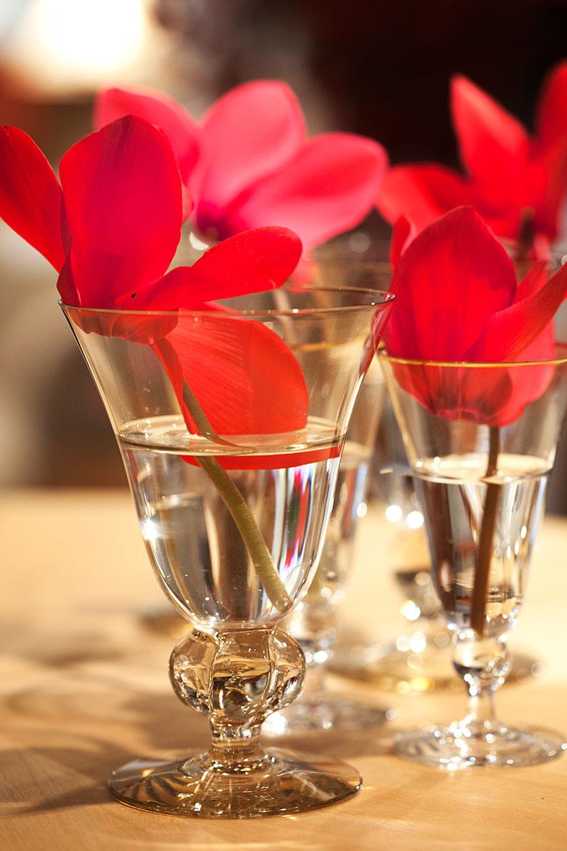 Röd cyklamen i snapsglas som snittblomma