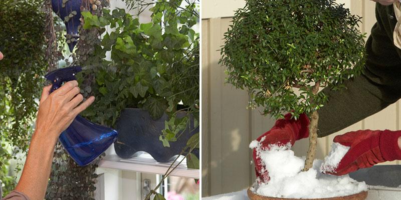 Dusch och fukt till krukväxter på vintern