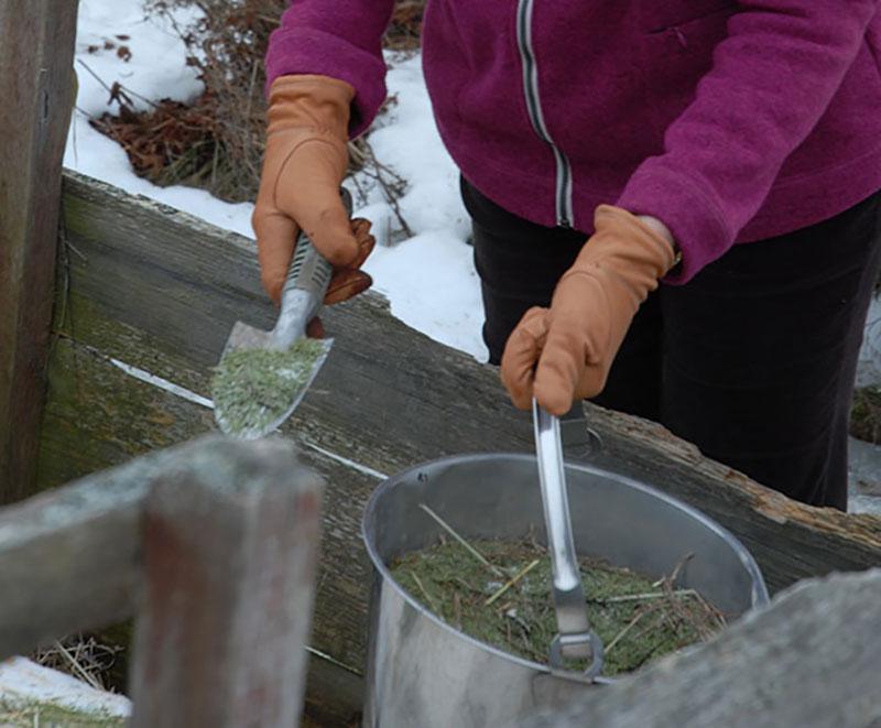 Granbarr från julgran i kompost