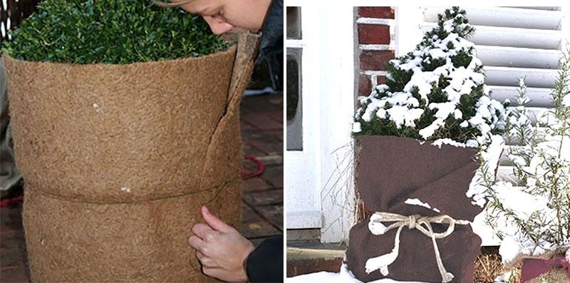 Skydd av krukor ute på vintern