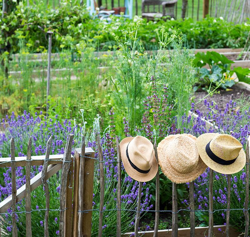 Köksträdgård med kastanjstaket