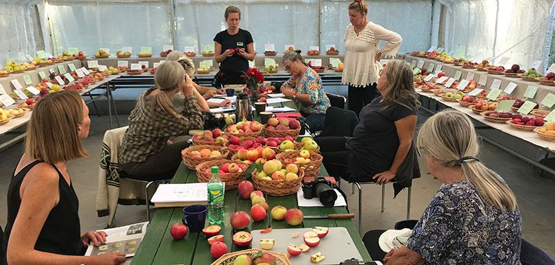 Kurs i pomologi, äppelodling på Julita