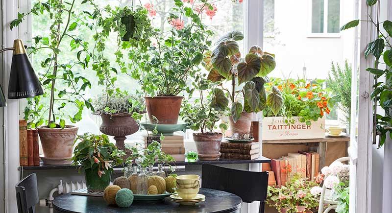 Hemmiljö med gammaldags krukväxter