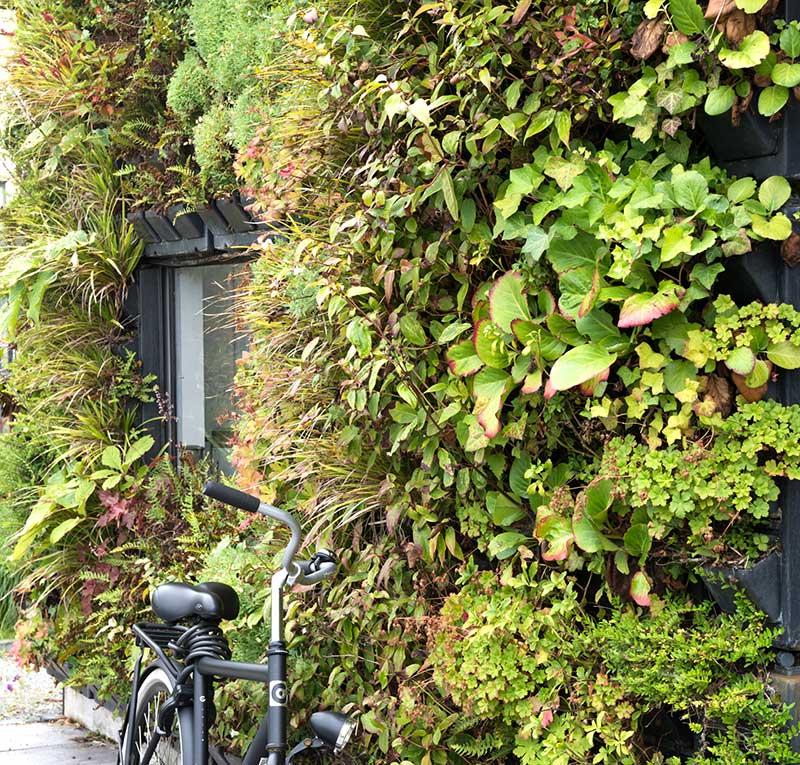 Växtvägg med perenner