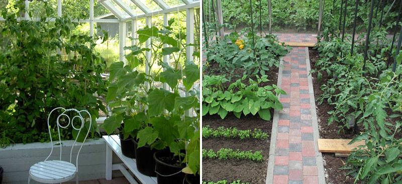 Växthus med odling i bädd, kruka och jord