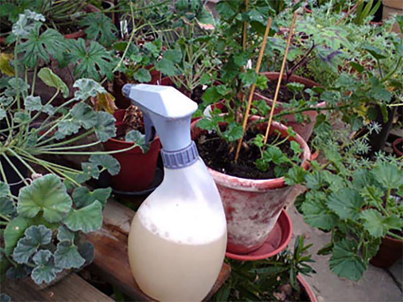 Rengöringsmedel för växthus i sprayflaska