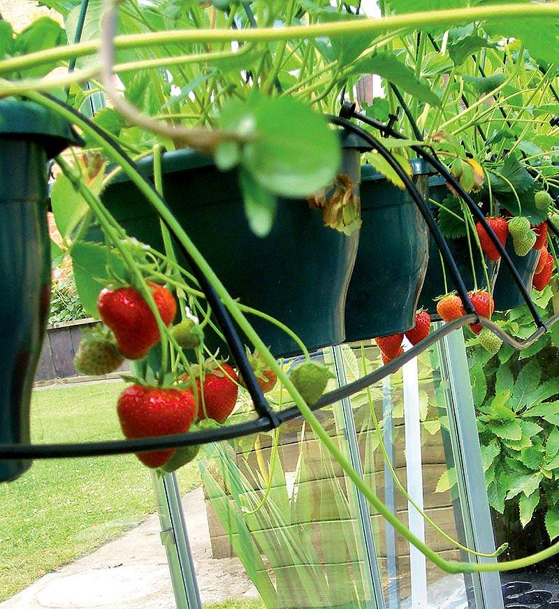Solcellsdriven bevattning i växthuset