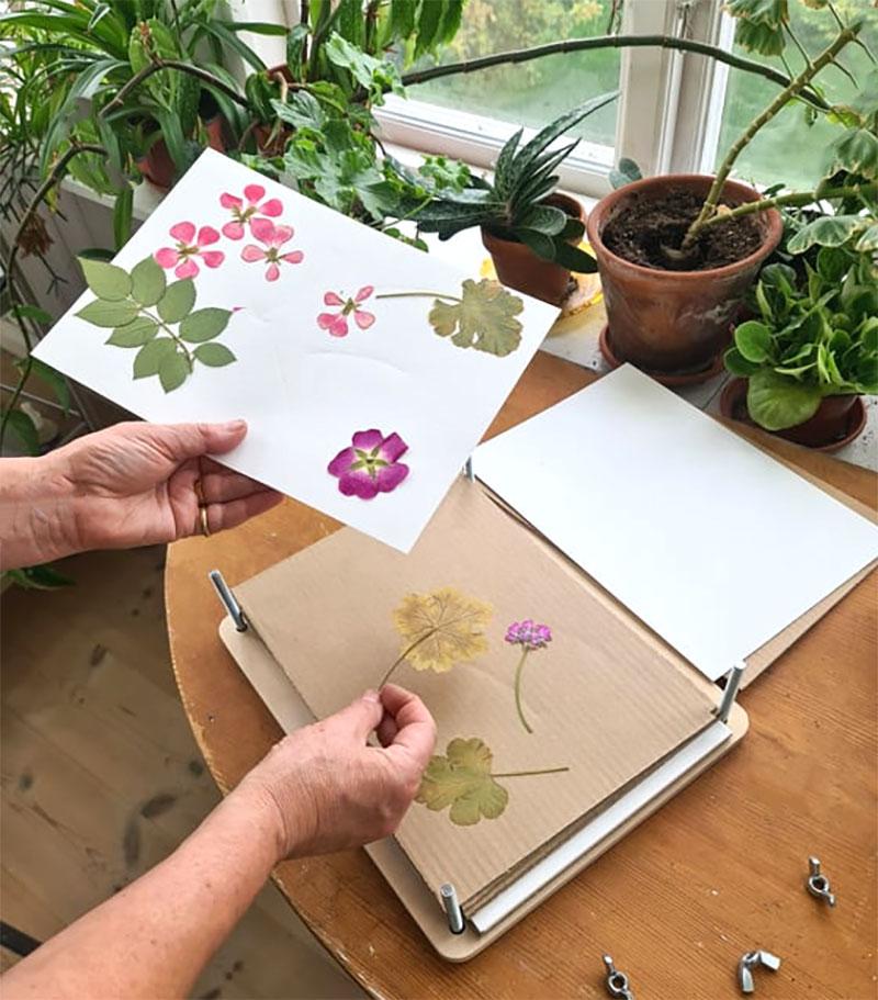 Torkade blommor från växtpress
