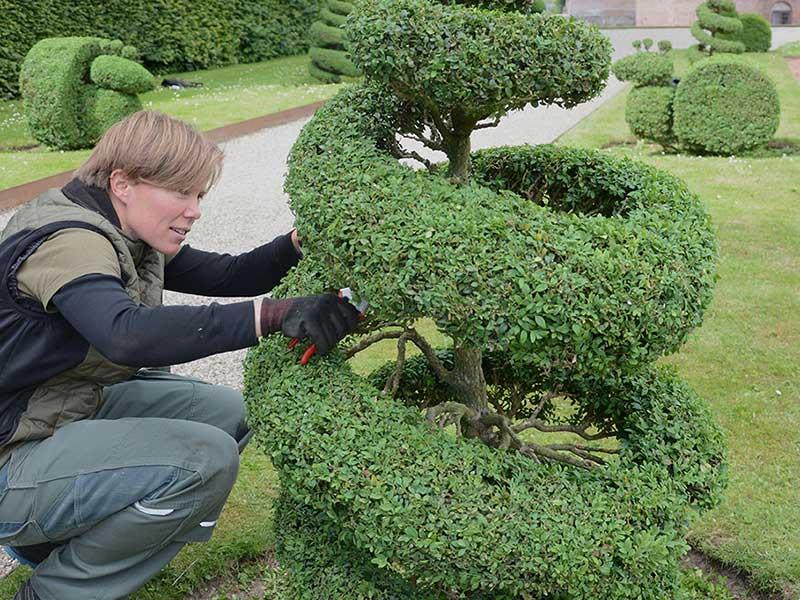 Formklippning av buxbom till figurer på Egeskovs slott Danmark