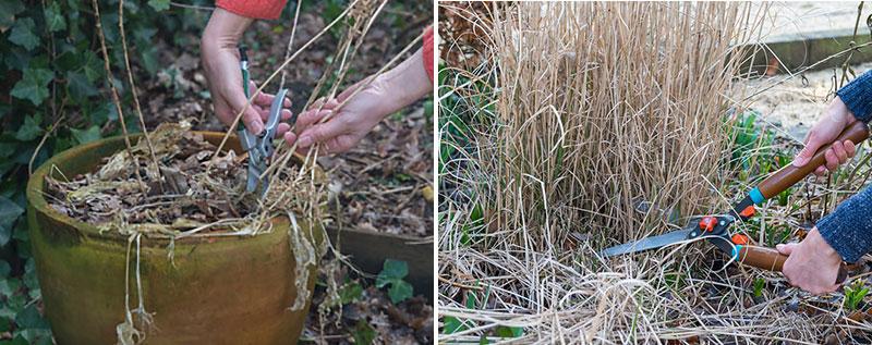 Beskärning av perenner och prydnadsgräs på våren