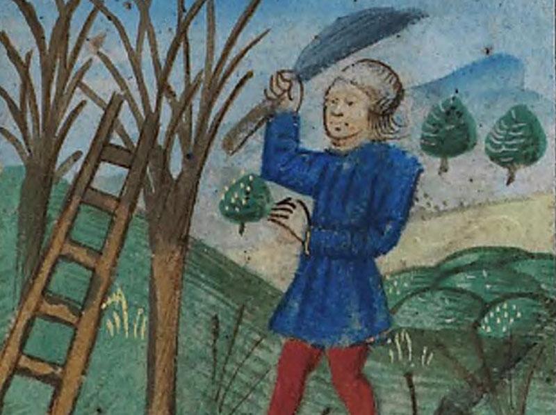Beskärning av pilar på vintern under medeltiden