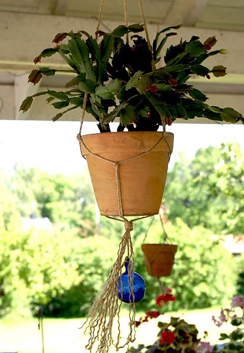 Krukväxt placerad utomhus i skugga på sommaren