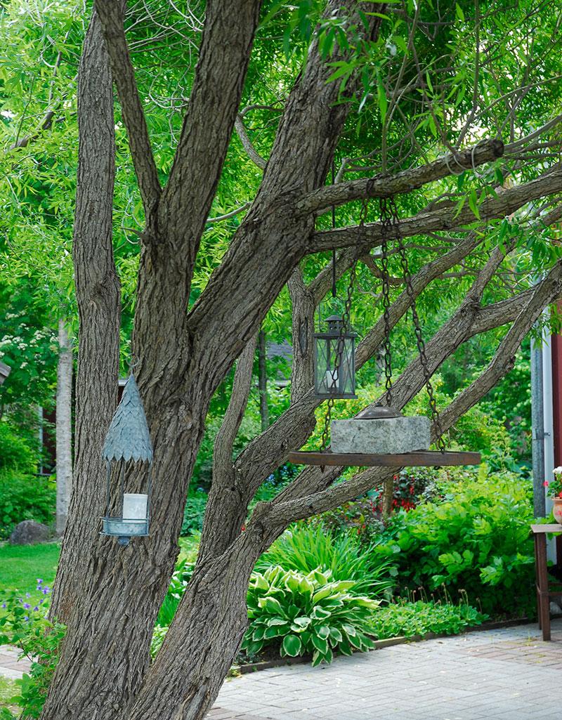 Pil träd som ger svalkande skugga
