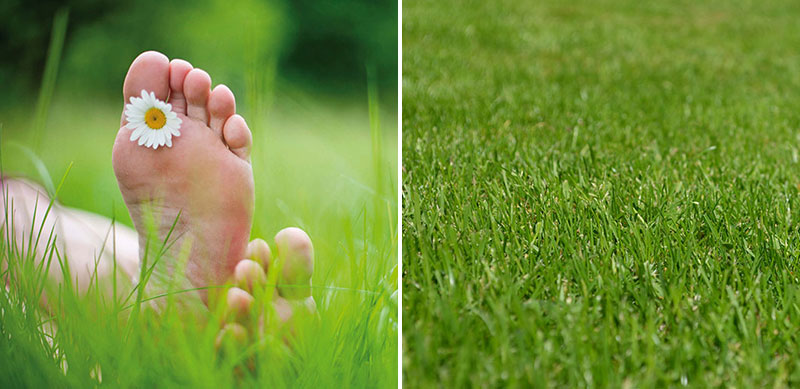 Lättskött gräsmatta Fritidshus
