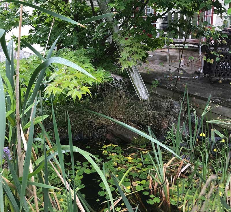 Uppsamling av regnvatten till en damm