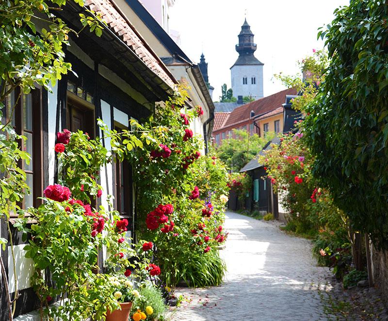 Rosor i Visby gatubild
