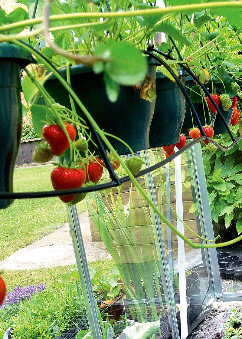 Irrigatia solcellsdriven bevattning kan användas också för amplar