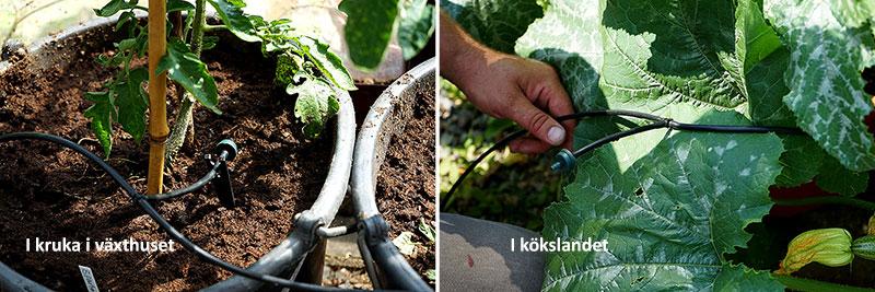 Installation av munstycken i tomatkruka i växthuset och i kökslandet
