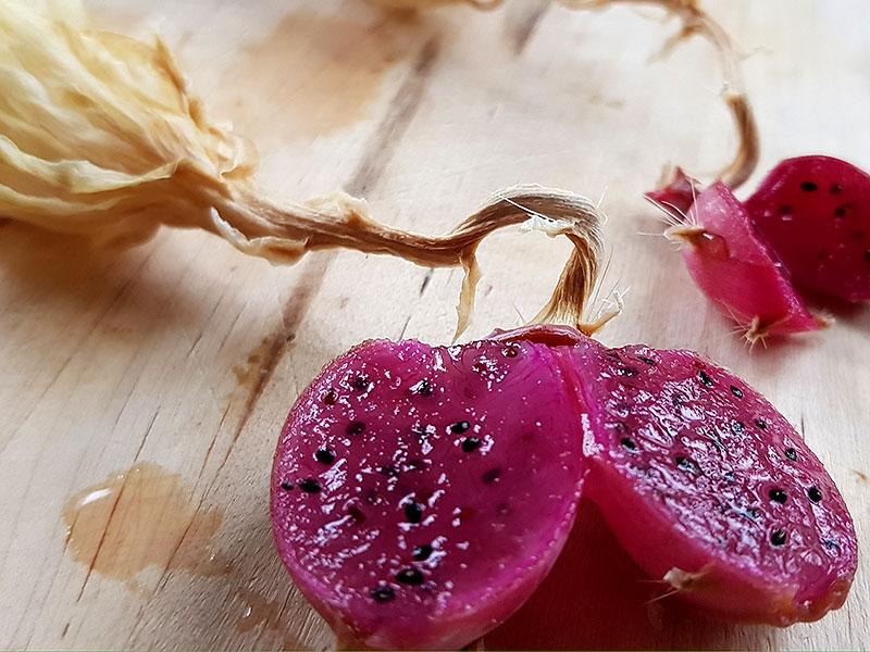 Frukter av bladkaktus med mogna fröer