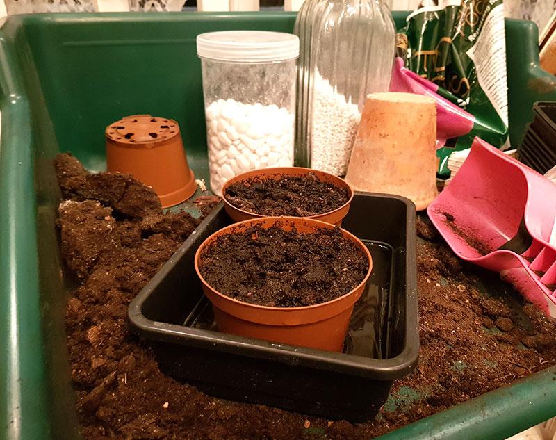 förbered odlingskrukor