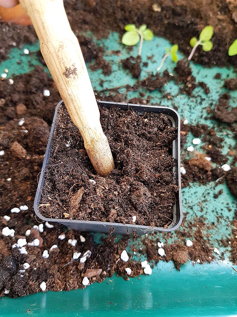 Planteringshål i krukan med prickelpinne