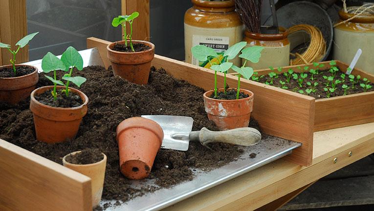 omskolning och sådd av trädgårdsväxter