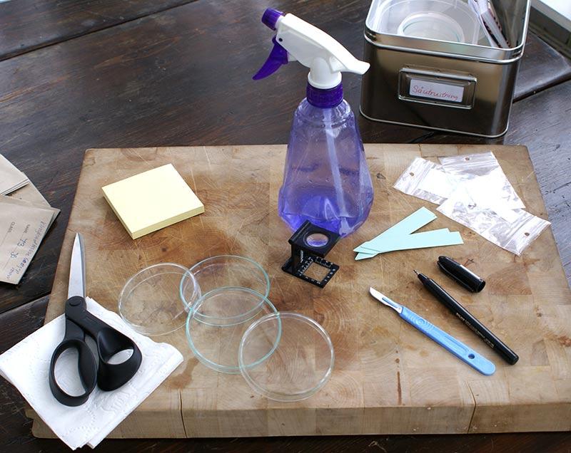Utrustning för att kläcka pelargonfröer för snabb grodd