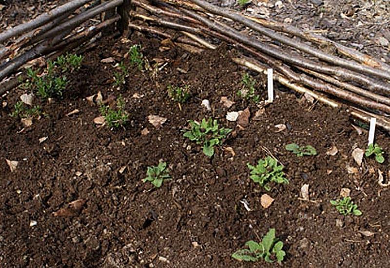 Barnkammare för frösådda växter