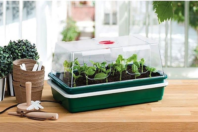 Miniväxthus med undervärme för uppdragning av frö och sticklingar