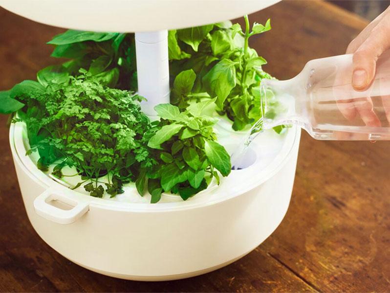 Odling av bladgrönt i hydrokultur
