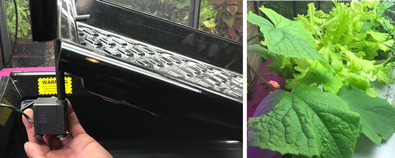 NFT-teknik med odlingslåda och gurkskörd