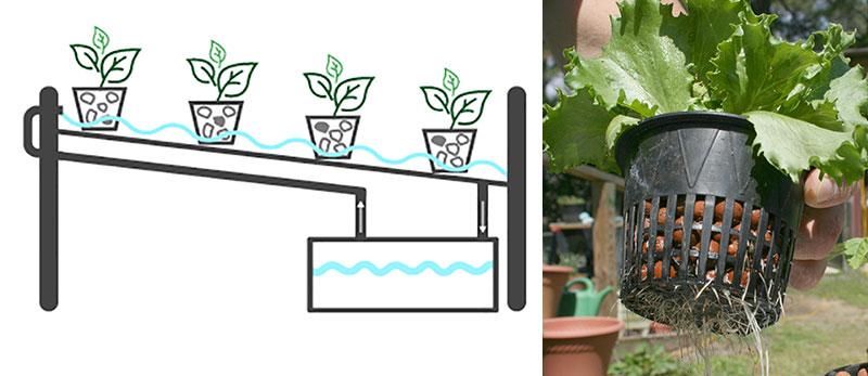Hydrokultur med NFT-teknik och sallat