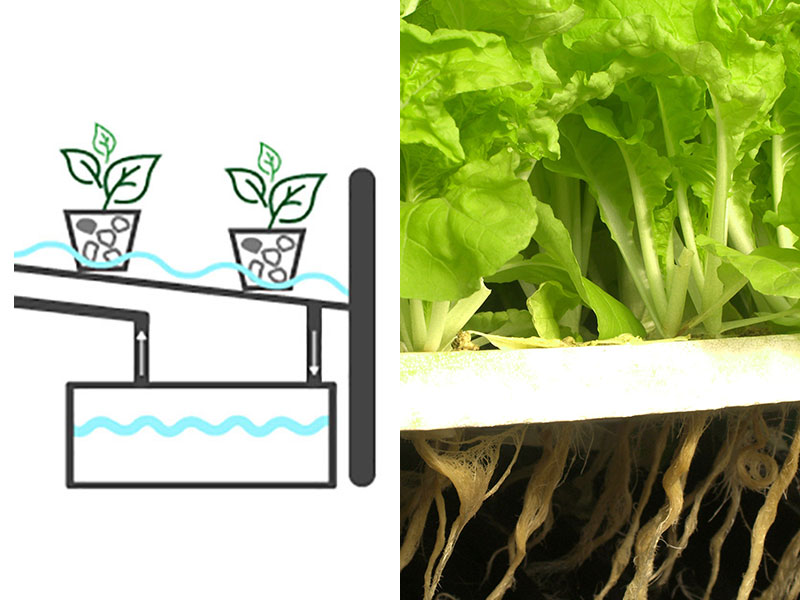 Odling av sallat i hydrokultur ebb och flod