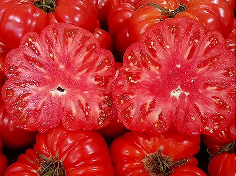 Tomatfrö i skuren tomat