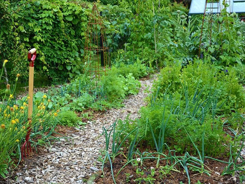 Köksland med grävfri odling av grönsaker