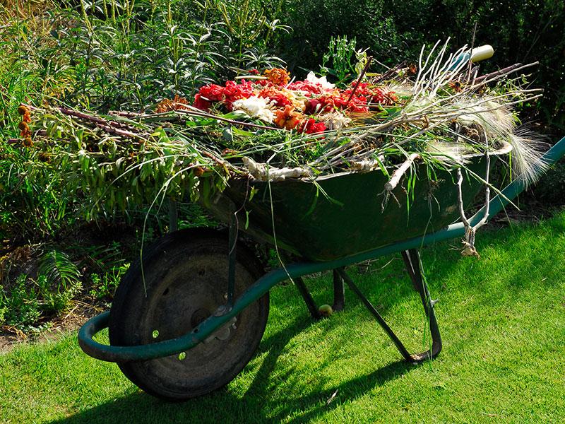 Skottkärra med växterna till täckodling
