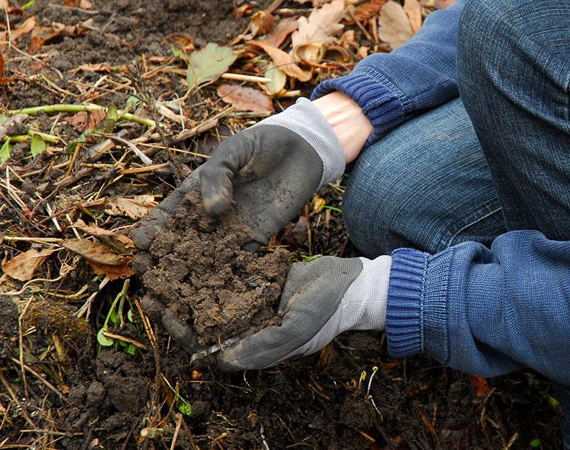 Egen jord till krukväxter