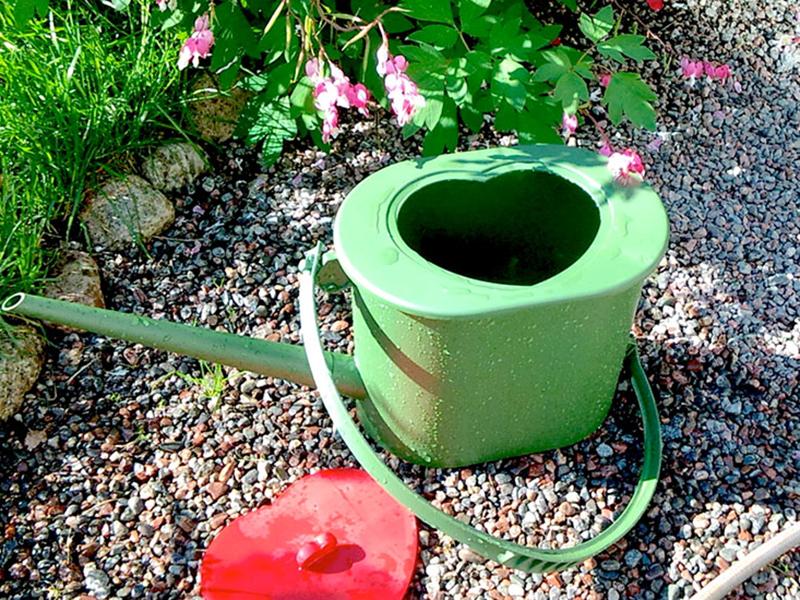 Vattning med urin i kanna med guldvatten