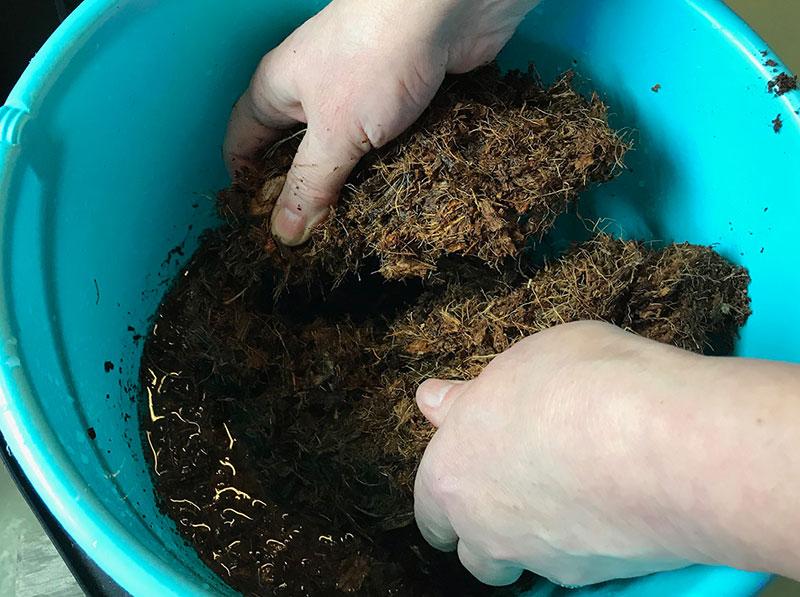 Uppblötning av kokosblock för odling