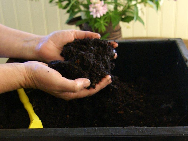 Maskgödsel, jord plockad direkt från maskkomposten