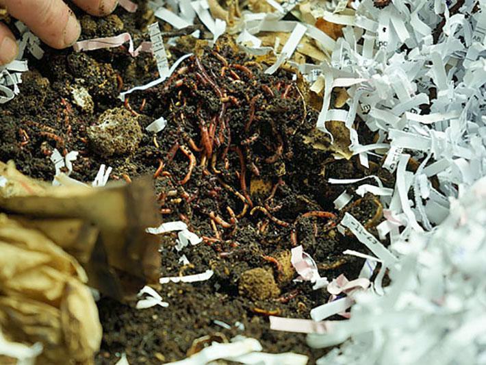 Fina kompostmaskar i maskkomposten inomhus